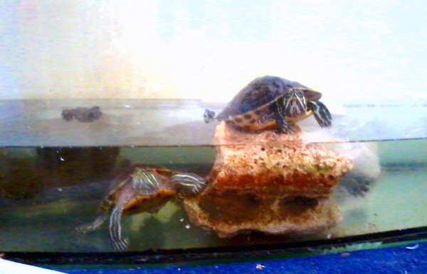 Some of my terrapins
