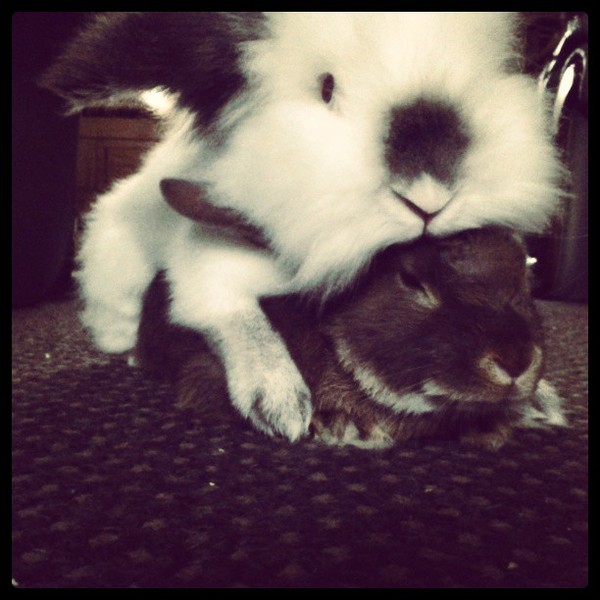 Jonah with one of his bunny pals. :)