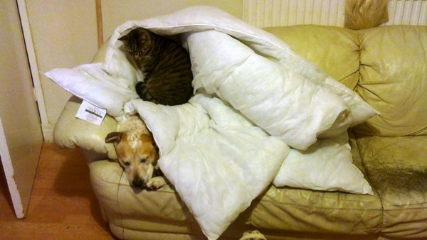 The dogs' and cats' idea of bunk beds!