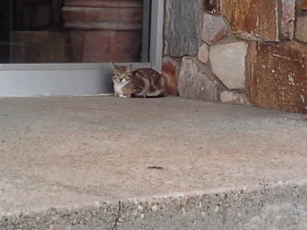 Feral cat in Gordon Heights, where we will add shelters