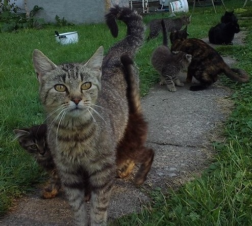 The cat in front is the queen mama cat, all others are her children/grand children