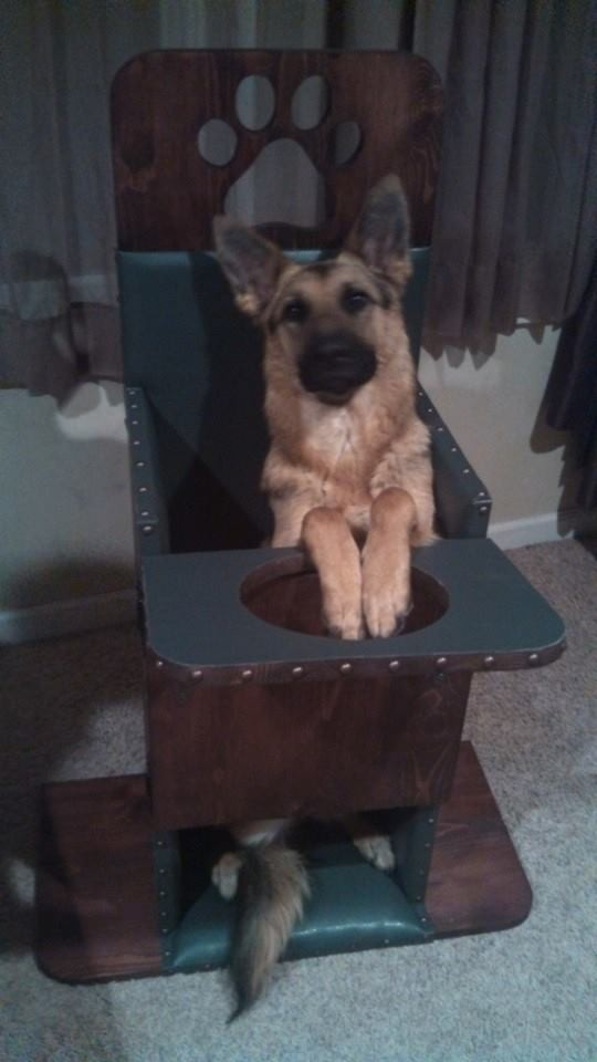 Dutchess in her Bailey Chair