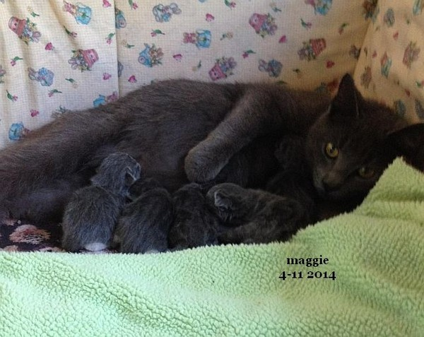 Maggie and Babies