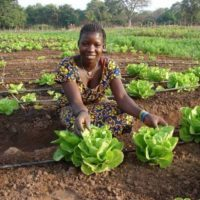 G4AW Grant Program: Increasing and Enhancing Sustainable Food Production