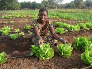 KALRO: Upscaling Agricultural Technologies to Enhance Productivity and Incomes for Smallholder Farmers in Kenya
