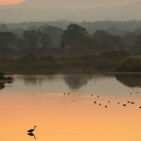 Ramsar: Call for Applications for Wetlands for the Future Fund