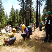 Apply for International Tropical Timber Organization (IITO) Fellowship Programme!