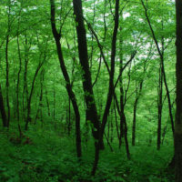 Funding Call for Kleinhans Fellowship to promote Community Forestry Research