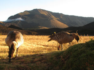 Rapid Action Grants supporting African CSOs to Conserve Threatened Species