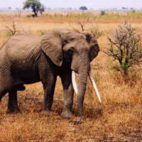 The Jana Robeyst Trust Fund for Small Conservation Grants in Sub-Saharan Africa