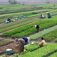 U.S. Department of State, Bureau of NEA: Supporting Tunisia's Agribusiness Sector