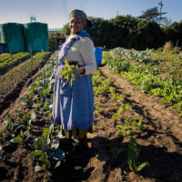 Call for Applications: Agriculture and Food Systems Innovation