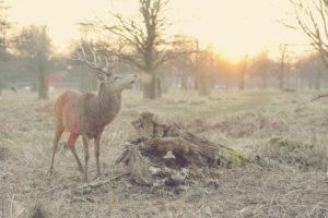 Call for Proposals: 2019-2020 Wildlife Habitat Canada (WHC) Grant Program