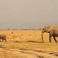 Elephant Family Grant 2018: Protecting Asian Elephants and Their Habitat