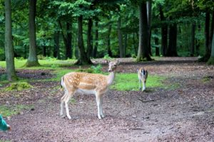 Nominations Open for MIDORI Prize for Biodiversity 2018!
