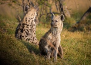 Apply for Fund for Wild Nature's Grant Program