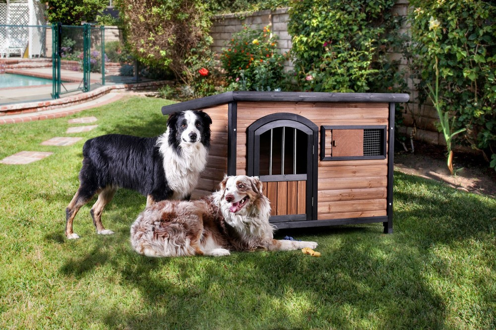 Carthage - Pet House