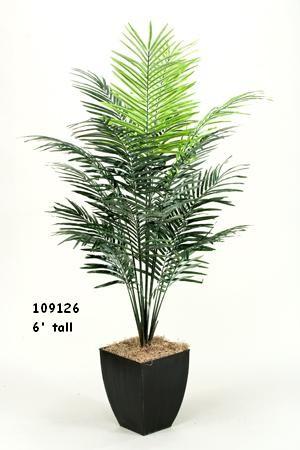 7' Dwarf Areca Palm Tree