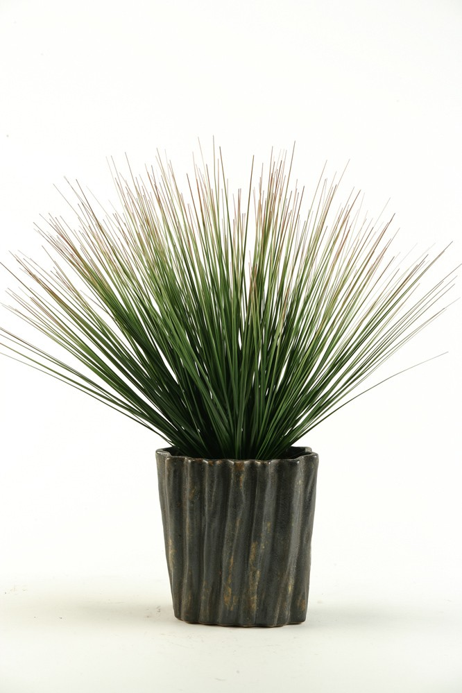 Onion Grass