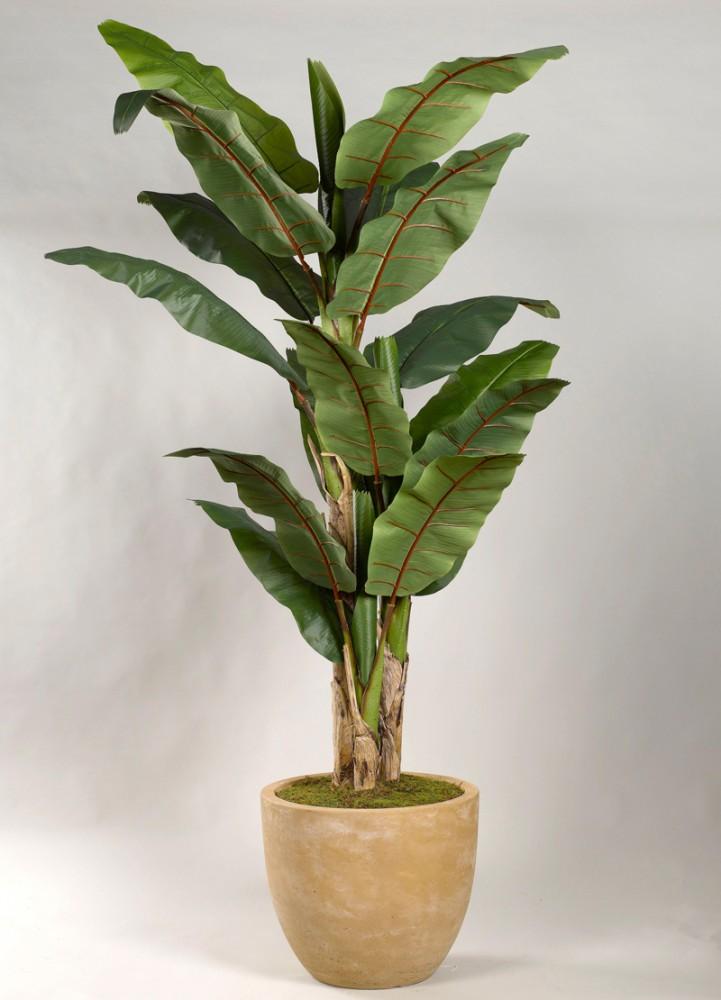 8' Banana Tree