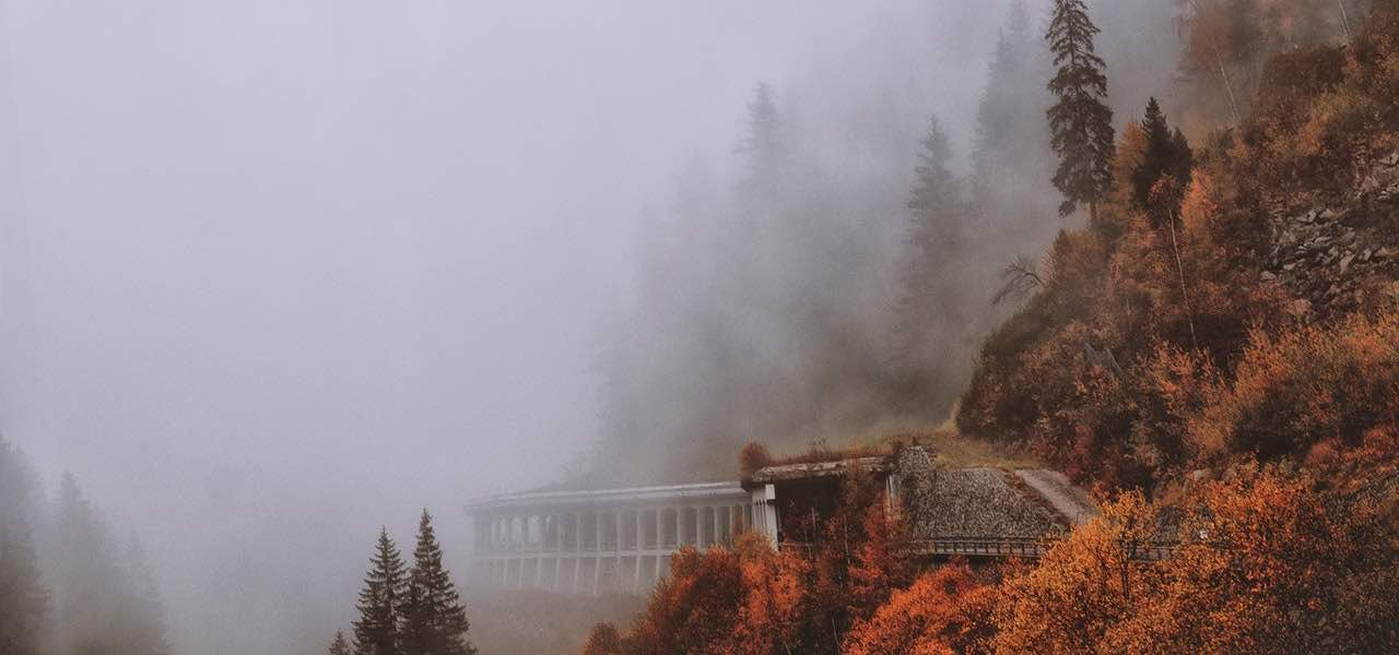 https://www.pexels.com/photo/brown-and-green-leaved-trees-covered-with-fog-691574/