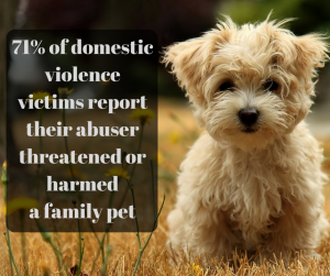 maltese pup 71 percent