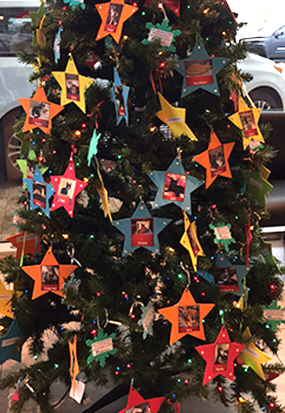 Pet adoption Christmas tree at Sun Toyota helps rescue pets find forever families