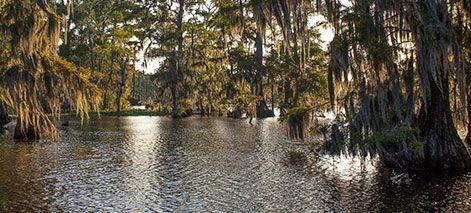 LA bayou