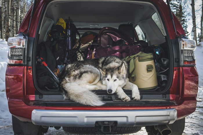 Open trunk full of luggage and dog of Toyota 4Runner