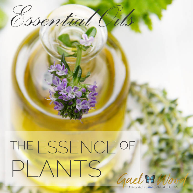 ACC-Essential-oils-the-essence-of-plants
