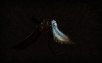 Uploaded by: Arfellon on 2012-03-05 15:44:37