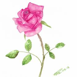 pink rose, 9 x 12 inch, esha lal,paintings,flower paintings,paintings for bedroom,renaissance watercolor paper,watercolor,9x12inch,GAL0432510211