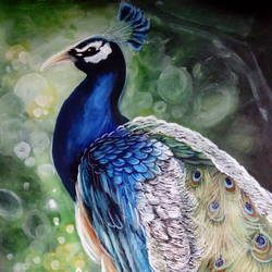 peacock, 13 x 21 inch, kiran s,paintings,nature paintings,paintings for office,hardboard,watercolor,13x21inch,GAL0435610249Nature,environment,Beauty,scenery,greenery