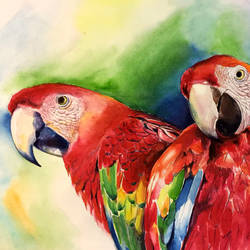 parrots, 17 x 13 inch, muralidhar suvarna,paintings,photorealism paintings,paintings for living room,drawing paper,watercolor,17x13inch,GAL0456910308