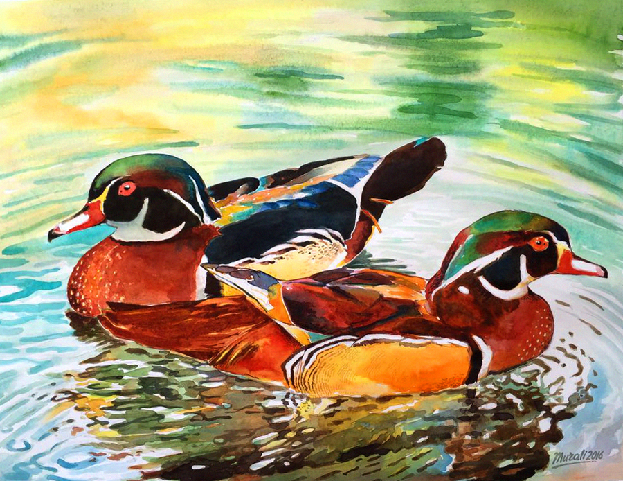 ducks, 17 x 13 inch, muralidhar suvarna,paintings,photorealism paintings,paintings for living room,drawing paper,watercolor,17x13inch,GAL0456910309