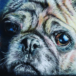 pug, 14 x 9 inch, muralidhar suvarna,drawings,paintings for living room,fine art drawings,drawing paper,pencil color,14x9inch,GAL0456910311