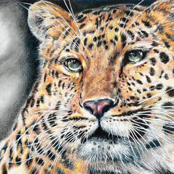 leopard, 14 x 9 inch, muralidhar suvarna,drawings,paintings for living room,fine art drawings,drawing paper,pastel color,14x9inch,GAL0456910316
