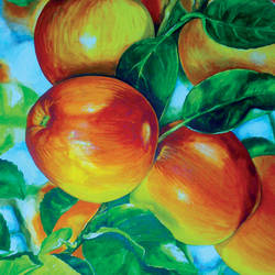 apples, 13 x 18 inch, muralidhar suvarna,paintings,nature paintings,paintings for dining room,handmade paper,watercolor,13x18inch,GAL0456910338Nature,environment,Beauty,scenery,greenery