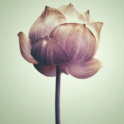 The flower art print by Gallerist