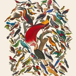 Birds art print by Gallerist