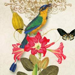 The colorful bird art print by Gallerist