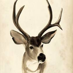 The Deer art print by Gallerist