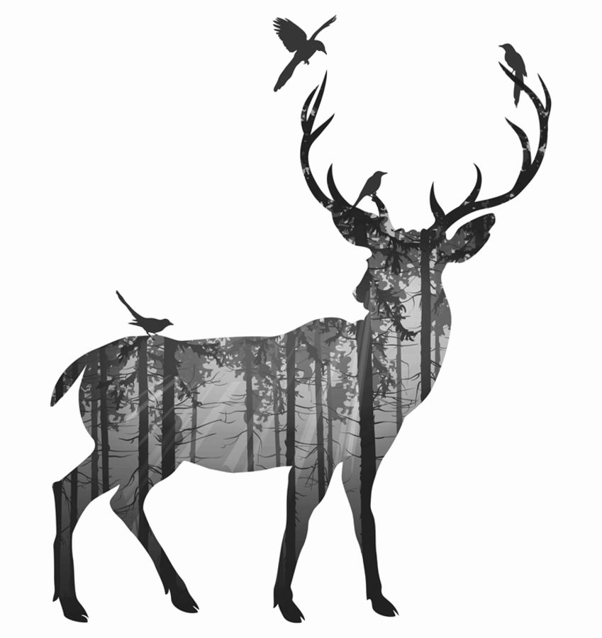 Single deer with birds 1