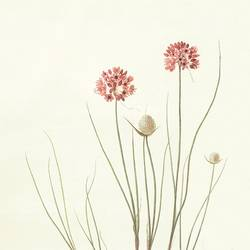 Pink flowers art print by Gallerist