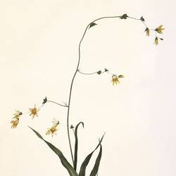 Yellow flowers art print by Gallerist