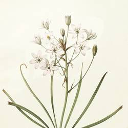 White and green flowers art print by Gallerist