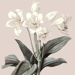 Beautiful white flowers art print by Gallerist