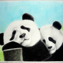 sleep like a panda, 14 x 17 inch, himanshi baid,paintings for bedroom,drawings,fine art drawings,ivory sheet,charcoal,14x17inch,GAL03951082