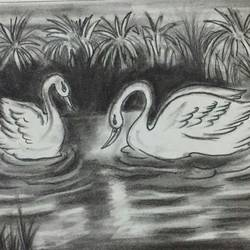 swans, 11 x 15 inch, chindu sudheer,drawings,paintings for dining room,paintings for living room,paintings for bedroom,art deco drawings,paintings for dining room,paintings for living room,paintings for bedroom,drawing paper,charcoal,11x15inch,GAL0442210832
