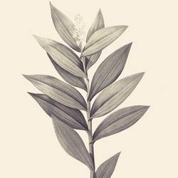 The leaf 1 art print by Gallerist